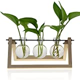 Mozing Bulb Vase, Desktop Clear Glass Planter Bulb Vase with Solid Wooden Stand and Metal Swivel Holder for Hydroponics Plants Home Garden Wedding Decoration(No Included Plants