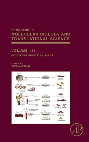 Genetics of Stem Cells: Part A (Progress in Molecular Biology and Translational Science Book 111)