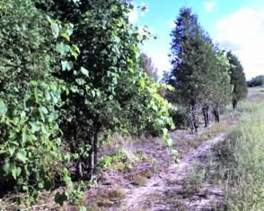 grape seedlings - 7