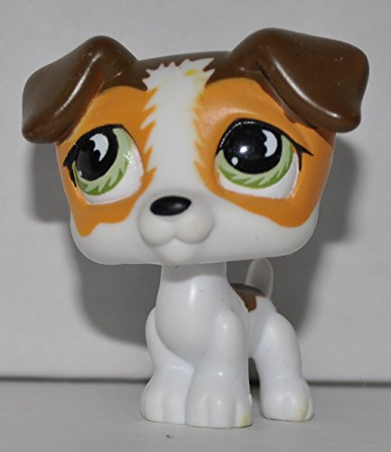 lps jack russell - 5