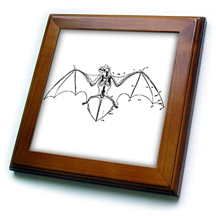 Amazon.com: PS Animals - Bat Skeleton black and white - 8x8 Framed ...