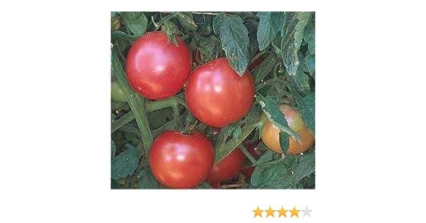 all non-gmo heirloom vegetable seeds! 30 EVA PURPLE BALLTOMATO 2020