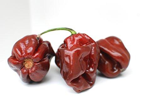 Salsa picante de Trinidad Scorpion/Nivel de picor: 10+ von 10 / Para Picanteros/Slow Food ...: Amazon.es: Alimentación y bebidas