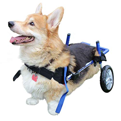 Walkin' Wheels Corgi Wheelchair - for Small Dogs 18-39 lbs - Veterinarian Approved - Wheelchair for Back Legs