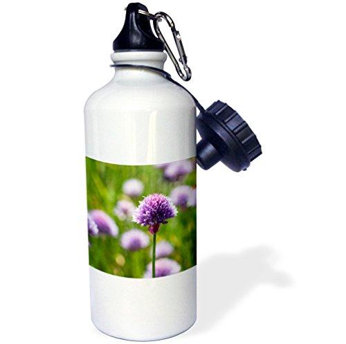 3dRose Uta Naumann Photography Flowers - Pink Leek Blossom in Meadow - 21 oz Sports Water Bottle (wb_253339_1)