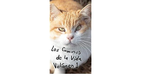 Los Caminos de la Vida: Los Gatos del Submundo (Spanish Edition ...