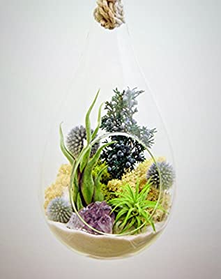 "Bliss Gardens Teardrop Air Plant Terrarium with Purple Amethyst, Juniper, Moss, Extra Large 13"" / Shabby Chic"