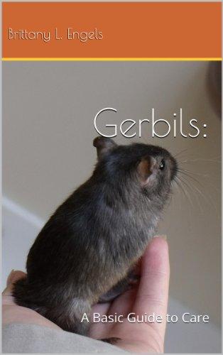 Gerbils: A Basic Guide To - Care Gerbil