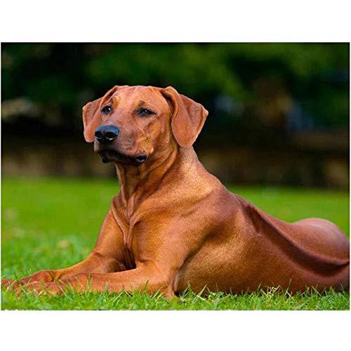 (HSQMA DIY Needleworks Diamond Embroidery Full Square 5D Diamond Painting Rhodesian Ridgeback pet Dog Picture of Rhinestones decor-30x40cm)