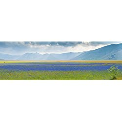 Flowering plants with mountain range in the backgrounds in Piani di Castelluccio Castelluccio Umbria Italy Poster Print (27 x 9)