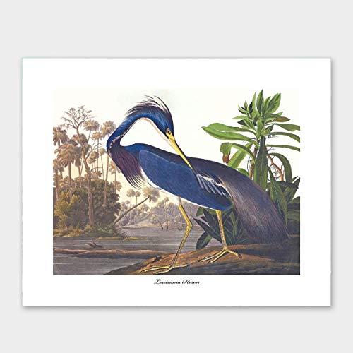 - Heron Art, Audubon Print (Louisiana Wall Decor, Coastal Room Artwork) – Unframed