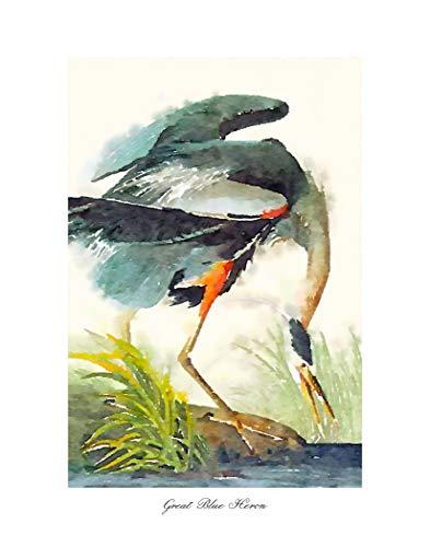 TFH California Beautiful Fine Art Bird Prints, Audubon Bird Collection, Featuring Bird Art Illustrations of North America. Giclee Prints (Great Blue Heron 8x10 Inch Print)