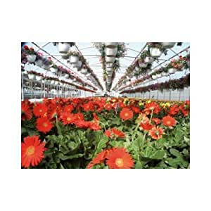 """Expansion Mansion Polyethylene and Polycarbonate Commercial Greenhouse Size / Span: 11'4"""" H x 42' W x 96' D with Double span"""