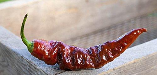 (Chocolate Bhut Jolokia Heirloom Ghost Pepper Premium Seed Packet + More )