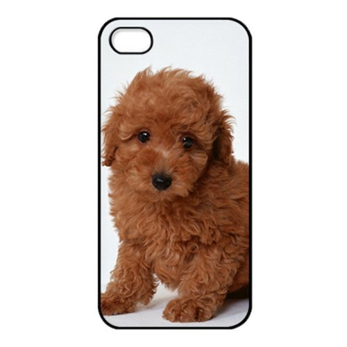 [Poodle Puppy dog cute animal pet HD image phone cases for iPhone 5c(HD Hard ABS Material)] (Adult Poodle Dog Costumes Plus Size)