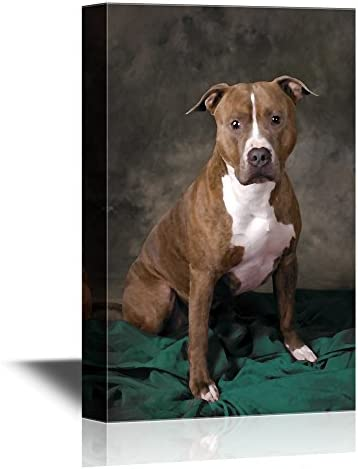 Dogs Breeds A Pit Bull on a Rug