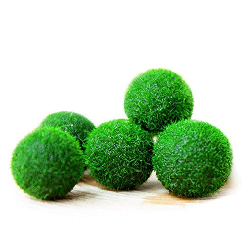 (5 Marine Moss Balls - Easy to Care for Live Plant - Add Pop of Green to Nano Tanks - Little Playballs for Clownfish, Angelfish, Ocellaris, Damsel Fish)