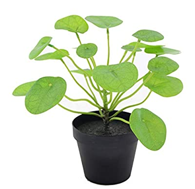 LuckyGreenery Artificial Plants Pilea, Realistic Fake Plants with Pots for Home and Office Decoration, 11in (H) x 12in (W)