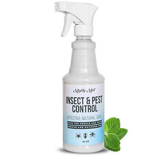Mighty Mint - 16oz Insect and Pest Control Peppermint Oil - Natural Spray for Spiders, Ants, and More - Non Toxic (Best Place To Get Essential Oils)
