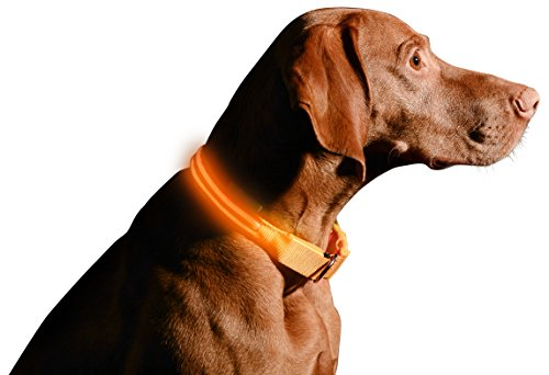 Picture of LED Dog Collar, USB Rechargeable, X-X-Small (8.6 - 11.4