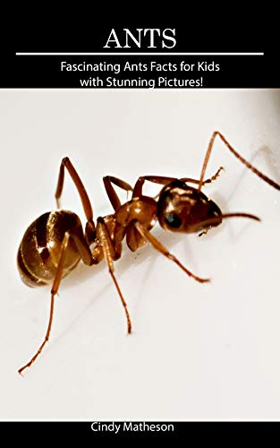 (Ants: Fascinating Ants Facts for Kids with Stunning)