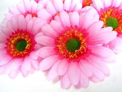 Amazon 12 Big Silk Light Pink Gerbera Daisy Flower Heads