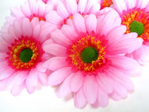 (12) BIG Silk Light Pink Gerbera Daisy Flower Heads , Gerber Daisies - 3.5