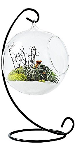 Mkono Clear Glass Vase Hanging Plant Terrarium with