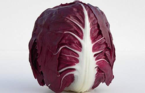 - Portal Cool 1000 Seeds of Red Chicory of Verona Apalla- Radicchio- Seed Salad