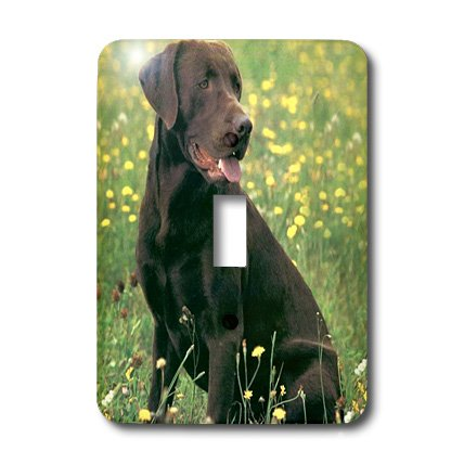 lsp_806_1 Dogs Labrador Retriever - Chocolate Labrador Retriever - Light Switch Covers - single toggle switch