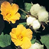 Outsidepride Cotton Levant - 100 Seeds