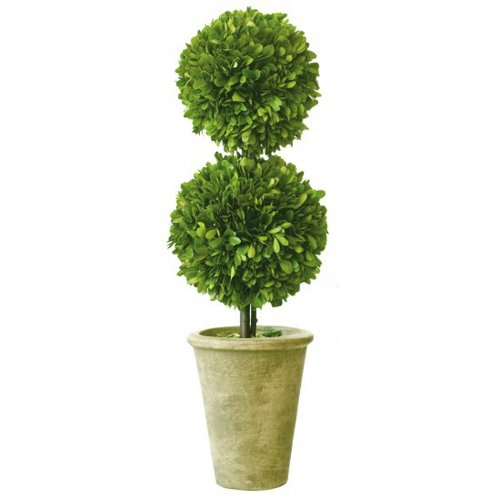 """Preserved Boxwood Double Ball 20"""""""