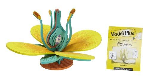flower model - 8