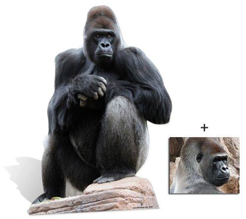 Gorilla - Wildlife/Animal Lifesize Cardboard Cutout / Standee / Standup - Includes 8x10 (20x25cm) Star Photo