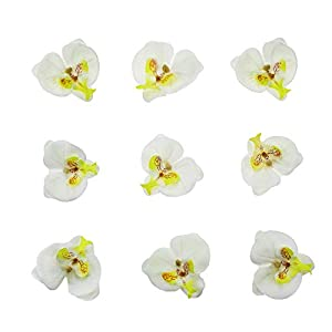 HZOnline Artificial Silk Phalaenopsis Flower Heads, Fake Butterfly Orchid Head Floral Bouquet for Crafts Wedding Decoration DIY Making Bridal Hair Clips Headbands Dress Photography Props (20pcs White) 1