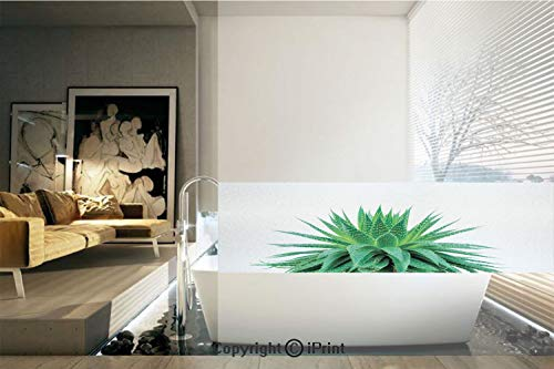 Decorative Privacy Window Film/Medicinal Aloe Vera with Vibrant Colors Indigenous Species Alternative Natural Remedy/No-Glue Self Static Cling for Home Bedroom Bathroom Kitchen Office Decor Fern Green
