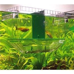 Aquarium fish breeding box seperator baby fish for Fish breeder box
