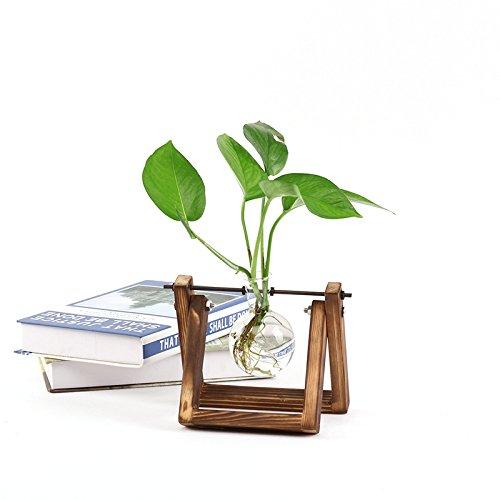 - Ivolador Desktop Glass Planter Bulb Vase with Retro Solid Wooden Stand and Metal Swivel Holder for Hydroponics Plants Home Garden Wedding Decor (1 Bulb Vase)