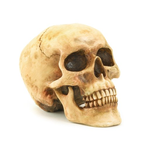 Gifts & Decor Grinning Realistic Replica Human Skull Home Statue (Halloween Theme Day Ideas)