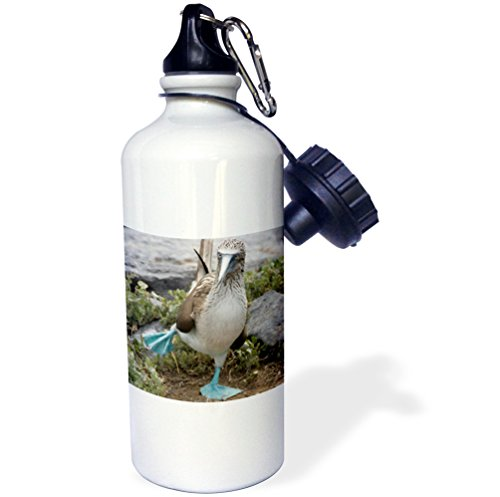"3dRose wb_86141_1 ""Ecuador Galapagos Islands Blue-footed Booby SA07 CMI0902 Cindy Miller Hopkins"" Sports Water Bottle, 21 oz, White"