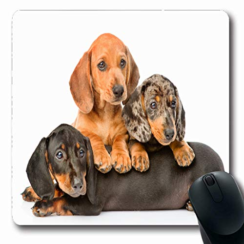 Ahawoso Mousepads Doggy Puppy Group Dachshund Dogs Lying Together Domestic Shorthair Miniature Away Baby Tortoiseshell Oblong Shape 7.9 x 9.5 Inches Non-Slip Gaming Mouse Pad Rubber Oblong Mat