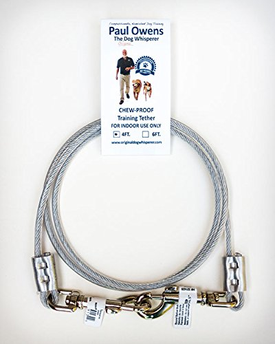 4 Dog Training (4 Ft. Chew-Proof Training Tether for Dogs & Puppies)