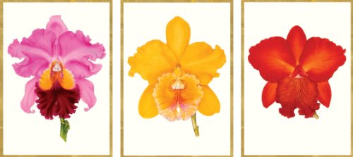 Entertaining with Caspari Royal Horticultural Society Orchids Blank Notecards, Set of 8