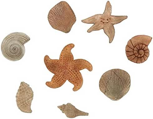 Shells & Starfish - Silicone Icing Moulds for Cake and Cupcake Decoration