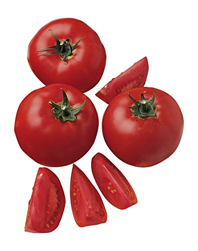 Burpee Bush Early Girl Tomato Seeds 30 seeds