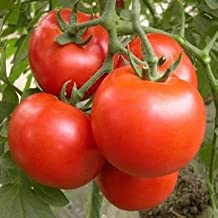 Pakhuis 10PCS Brandywine Tomato Seeds Garden Fruit Vegetable Seeds