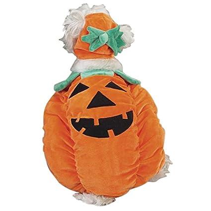 Zack u0026 Zoey Pumpkin Pooch Costume Medium  sc 1 st  Amazon.com & Amazon.com : Zack u0026 Zoey Pumpkin Pooch Costume Medium : Pet ...