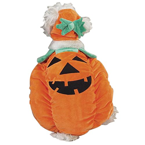 Zack & Zoey Pumpkin Pooch Costume, Medium]()