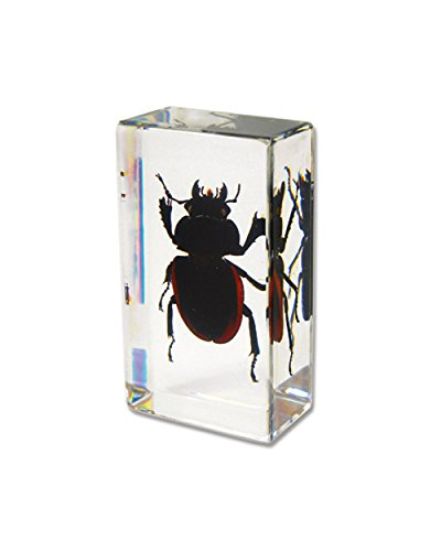 Paperweight Bug - WGI Real Stag Beetle Paperweight