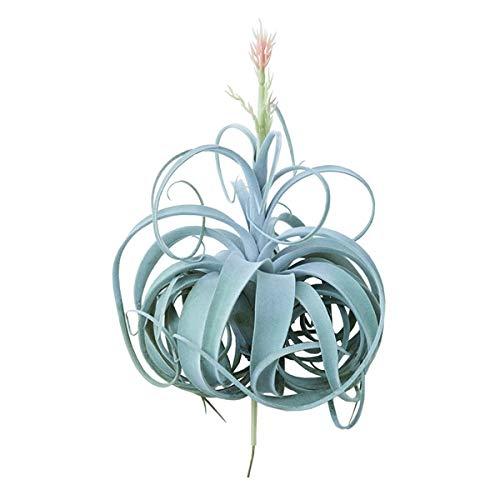 人工観葉植物 キセログラフィカピック花付き(2個セット) ba290 エアプランツ (代引き不可) インテリアグリーン 造花 AIRPLANT PICK B07SW9TLDX
